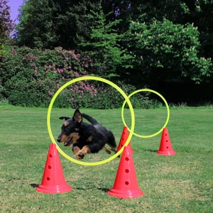 DOGM8 Dog Agility Rings Pack