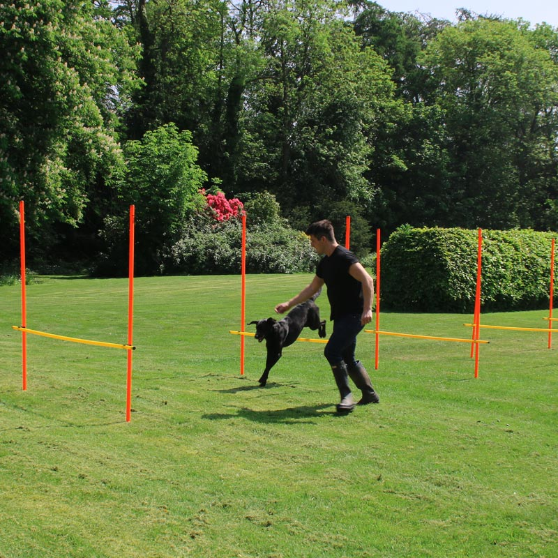 DOGM8 Dog Agility Slalom Hurdle Pack