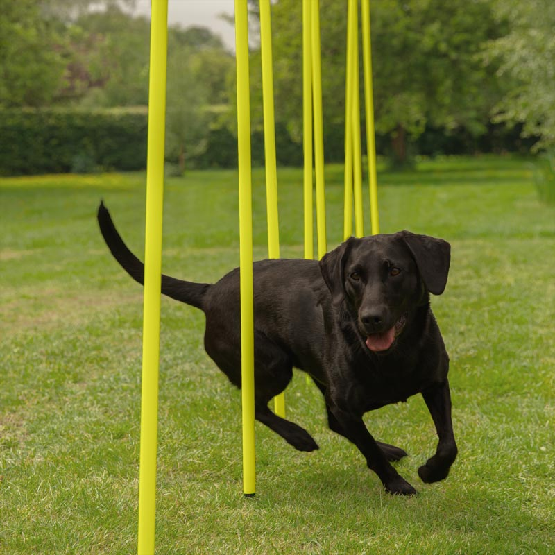 DOGM8 Dog Agility Weave Poles 12 Pack